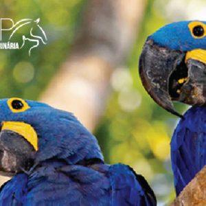 Medicina de Aves Silvestres