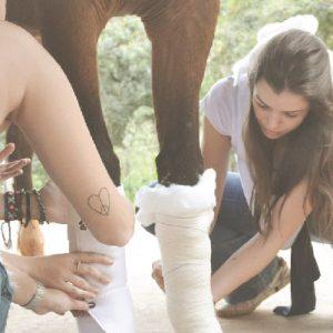 Clínica Emergencial em Equinos