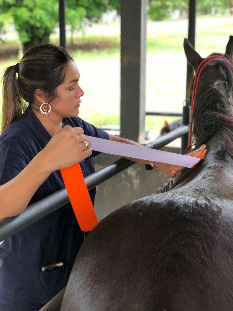 Medicina integrativa em equinos