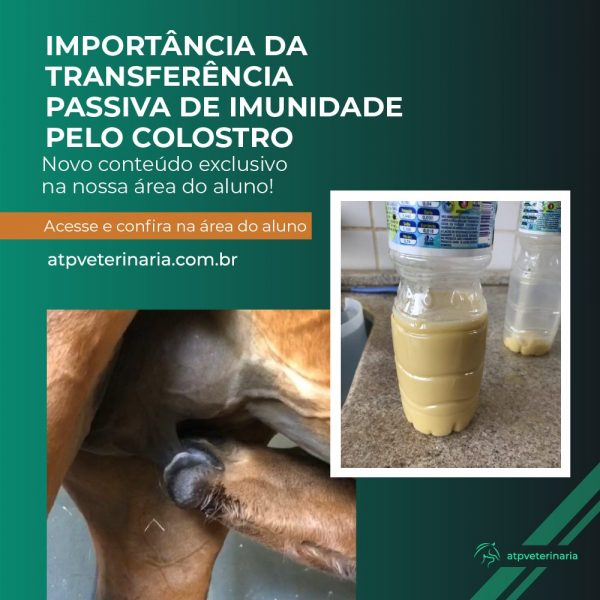 Importância da transferência passiva de imunidade pelo colostro, Felipe Leão