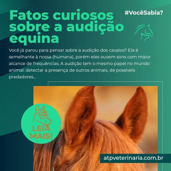 #VocêSabia? – Fatos curiosos sobre a audição equina