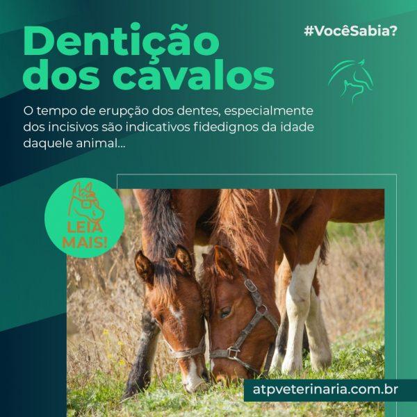 #VocêSabia? – Dentição dos cavalos