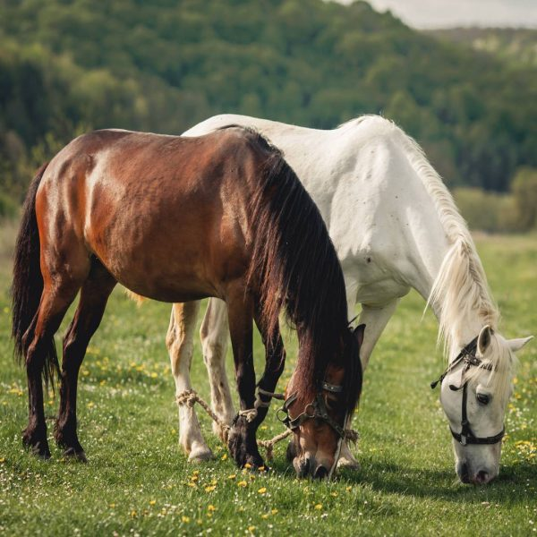 Entenda quais são os aspectos avaliados do sêmen do cavalo na reprodução equina